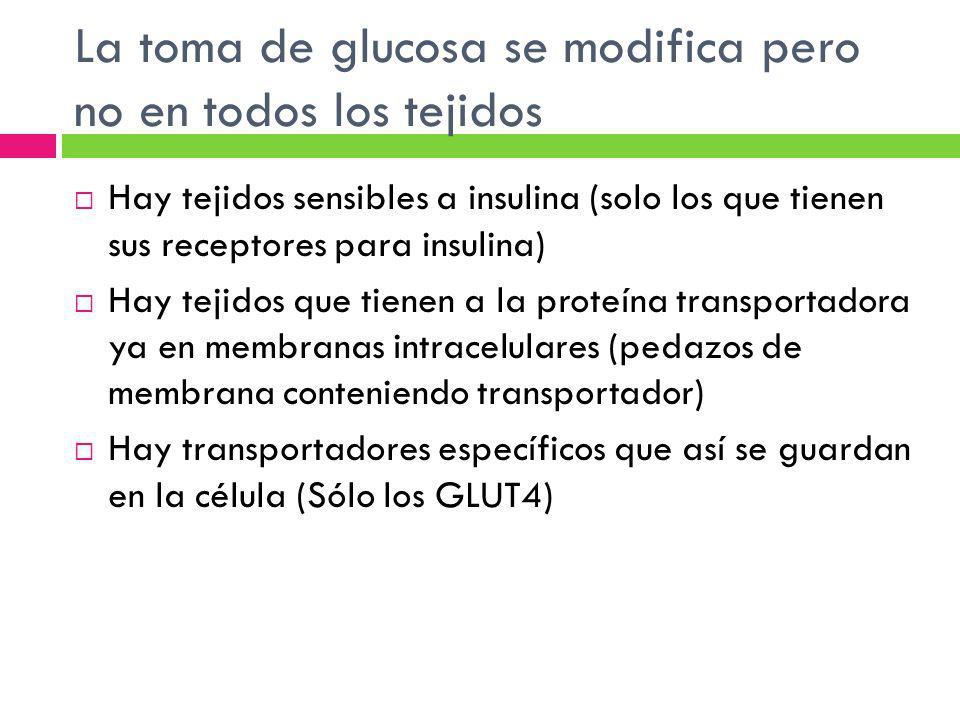 La toma de glucosa se modifica pero no en todos los tejidos
