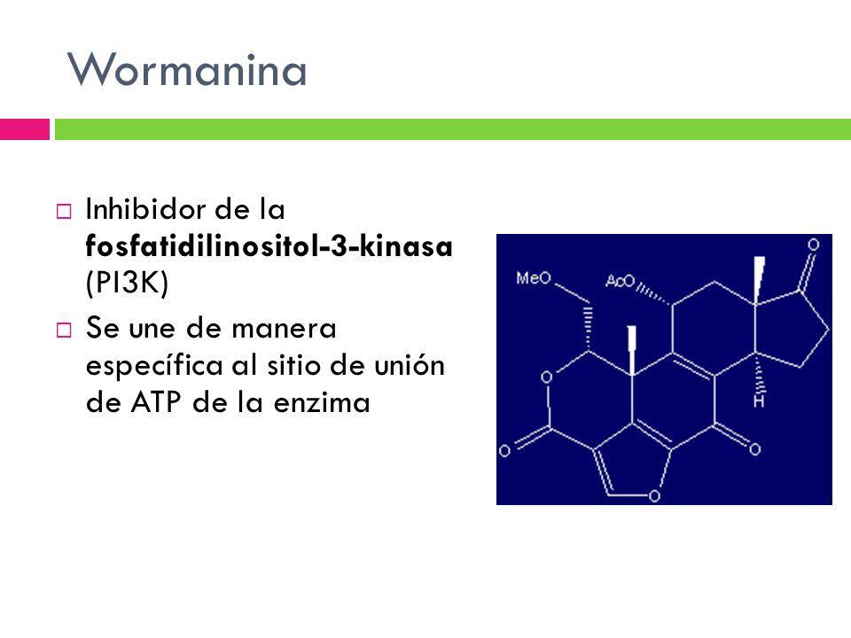 Wormanina Inhibidor de la fosfatidilinositol-3-kinasa (PI3K)