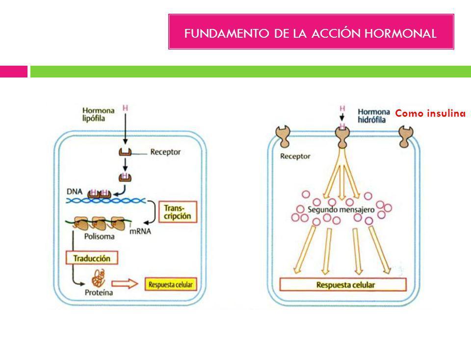 FUNDAMENTO DE LA ACCIÓN HORMONAL
