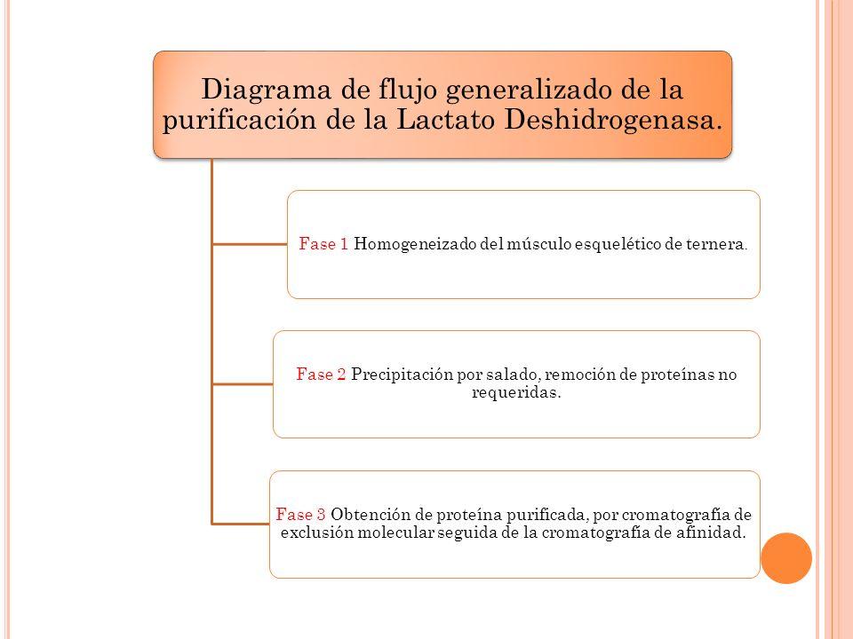 Fase 1 Homogeneizado del músculo esquelético de ternera.