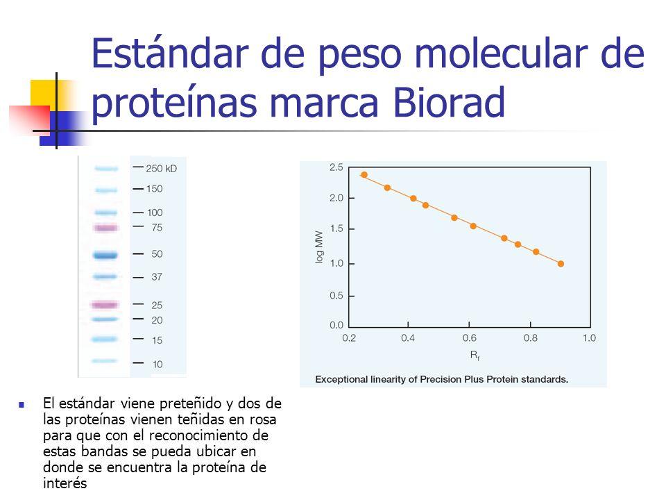 Estándar de peso molecular de proteínas marca Biorad