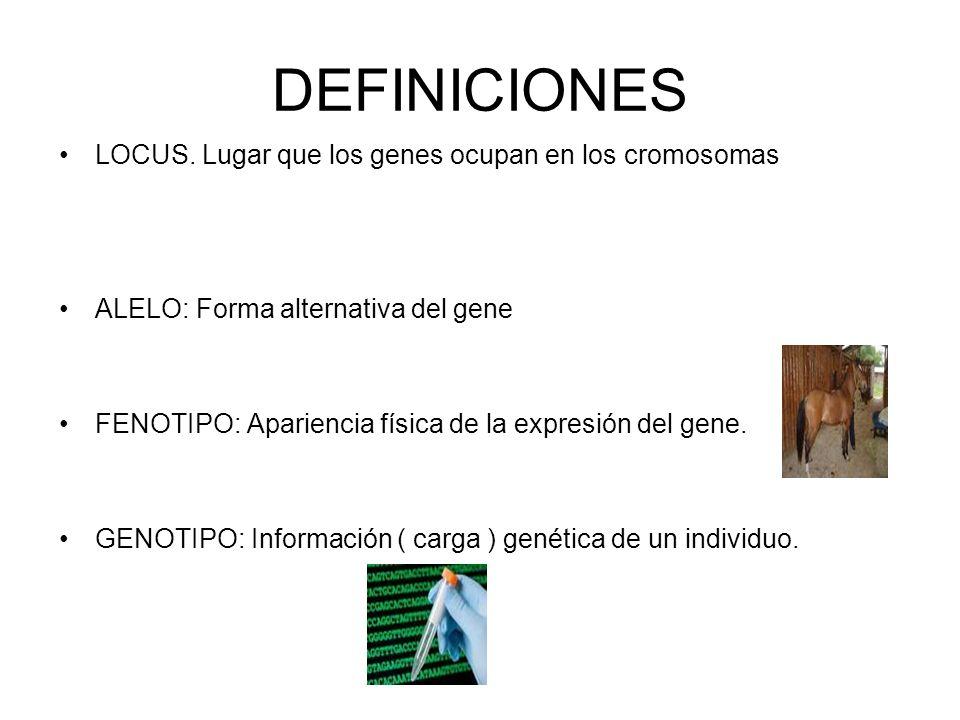 DEFINICIONES LOCUS. Lugar que los genes ocupan en los cromosomas