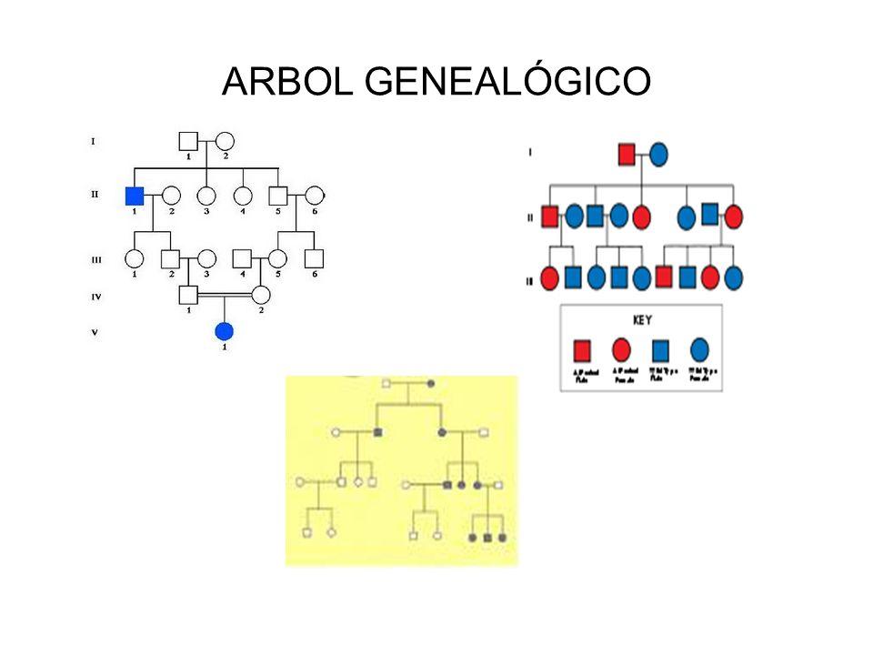 ARBOL GENEALÓGICO