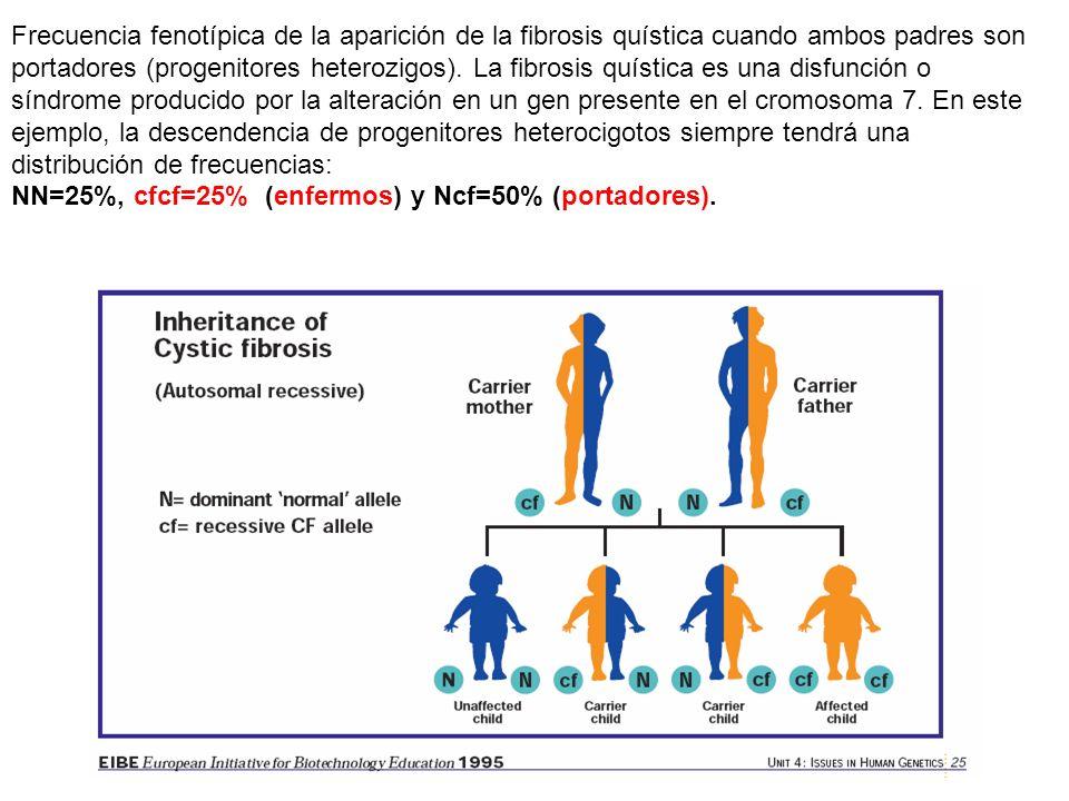 Frecuencia fenotípica de la aparición de la fibrosis quística cuando ambos padres son portadores (progenitores heterozigos).