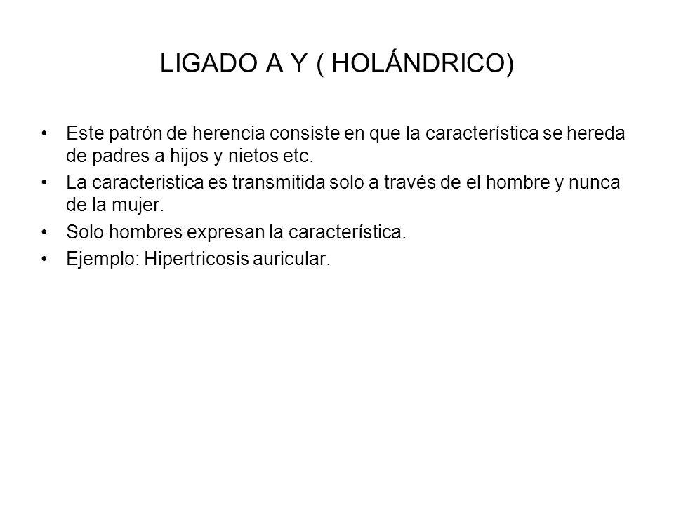 LIGADO A Y ( HOLÁNDRICO)