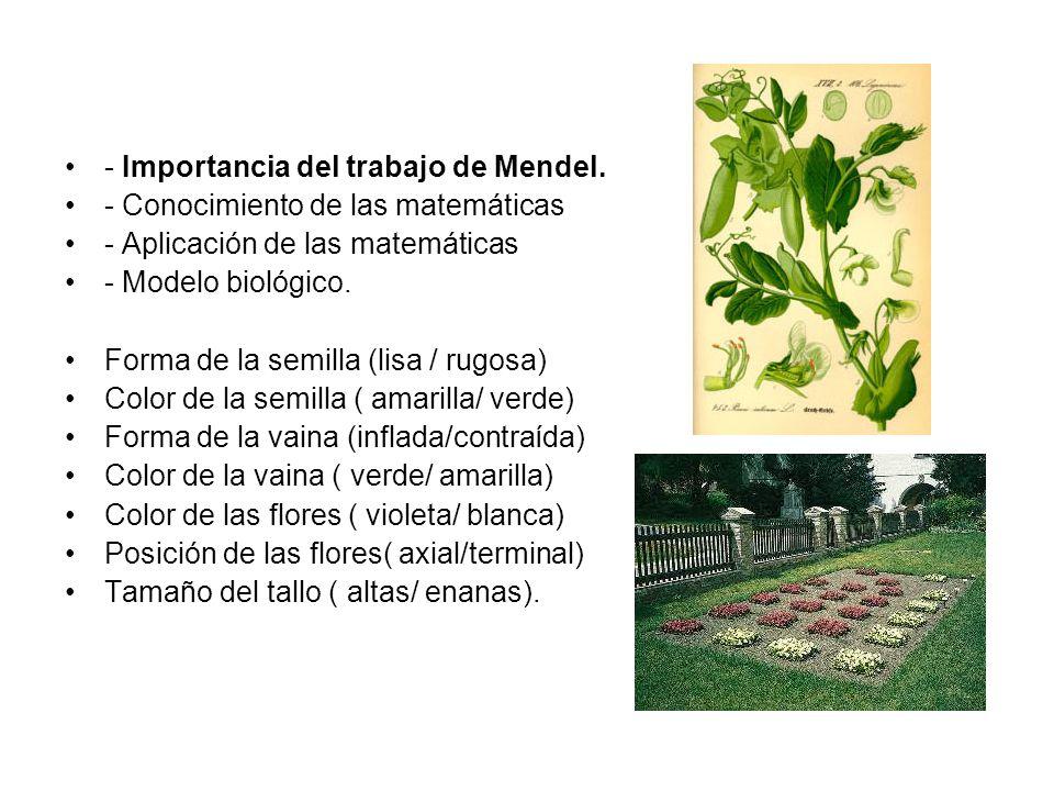 - Importancia del trabajo de Mendel.