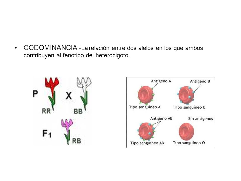 CODOMINANCIA.-La relación entre dos alelos en los que ambos contribuyen al fenotipo del heterocigoto.