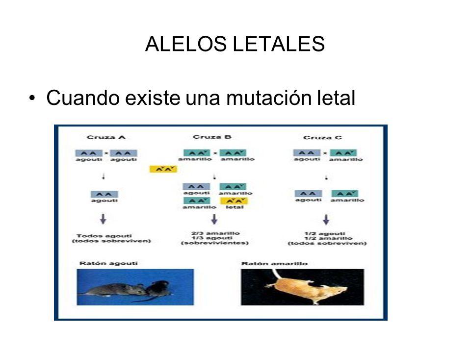 ALELOS LETALES Cuando existe una mutación letal
