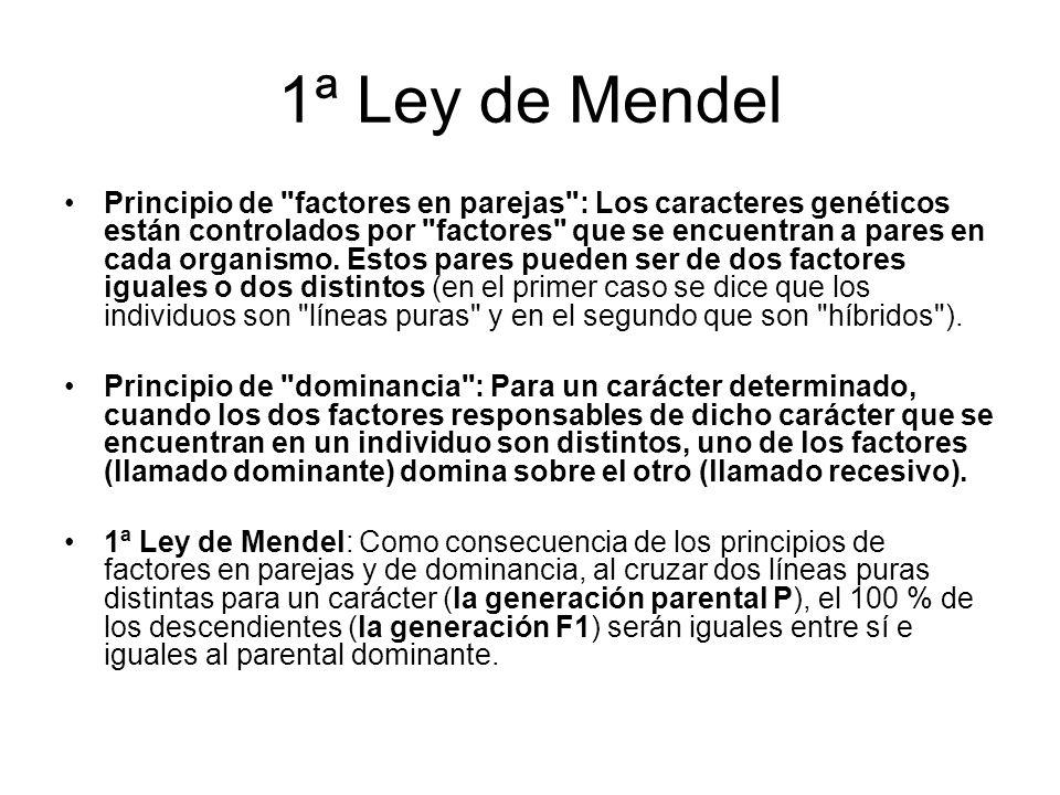1ª Ley de Mendel
