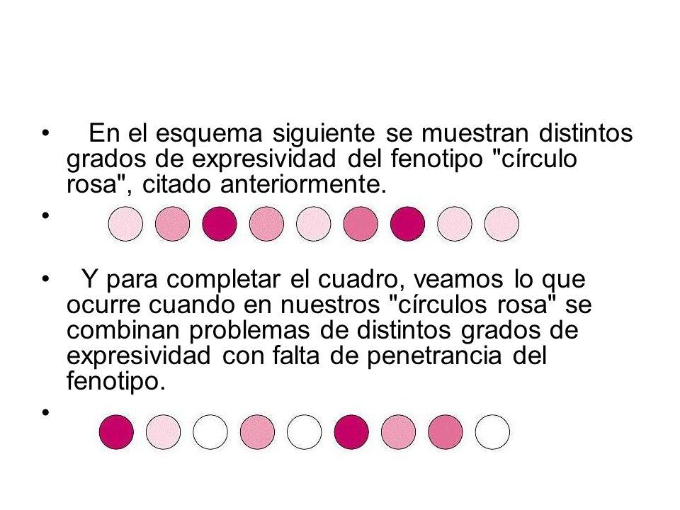 En el esquema siguiente se muestran distintos grados de expresividad del fenotipo círculo rosa , citado anteriormente.