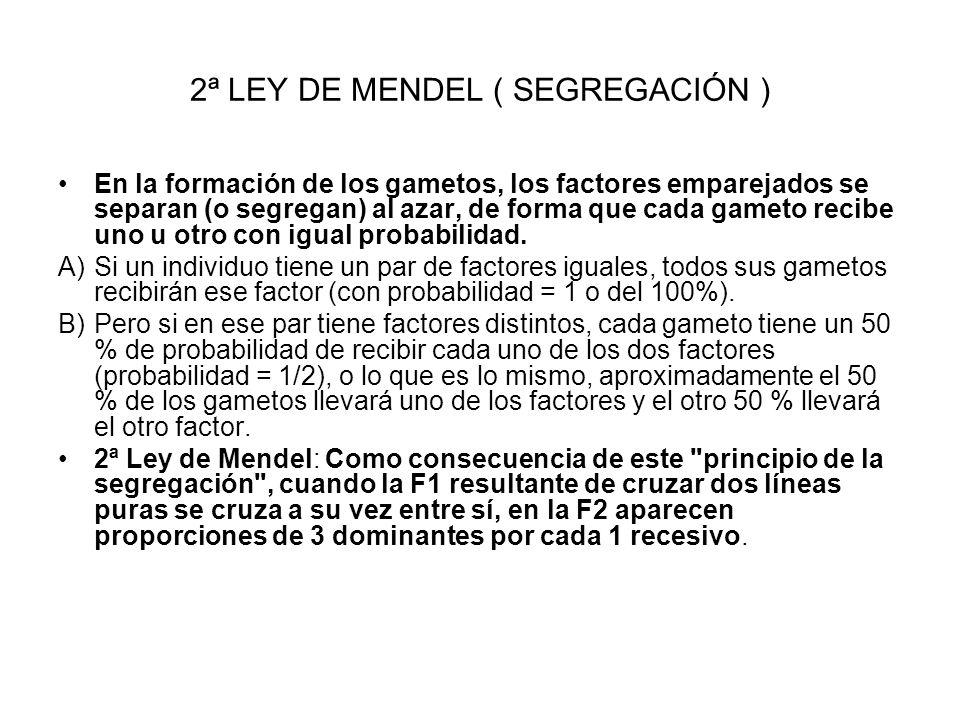 2ª LEY DE MENDEL ( SEGREGACIÓN )