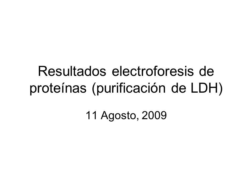 Resultados electroforesis de proteínas (purificación de LDH)