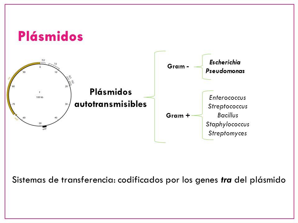 Plásmidos autotransmisibles