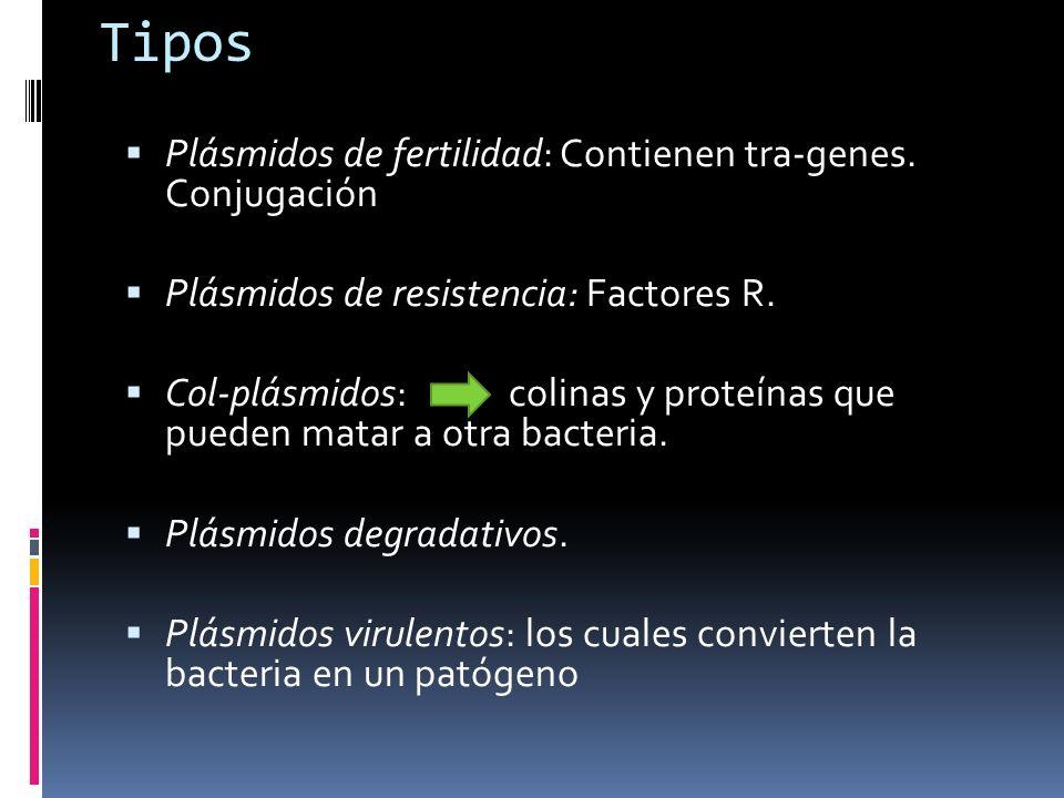 Tipos Plásmidos de fertilidad: Contienen tra-genes. Conjugación