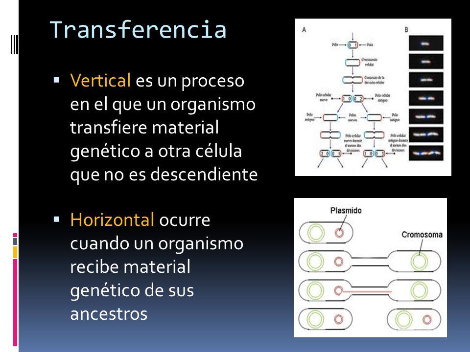 Transferencia Vertical es un proceso en el que un organismo transfiere material genético a otra célula que no es descendiente.