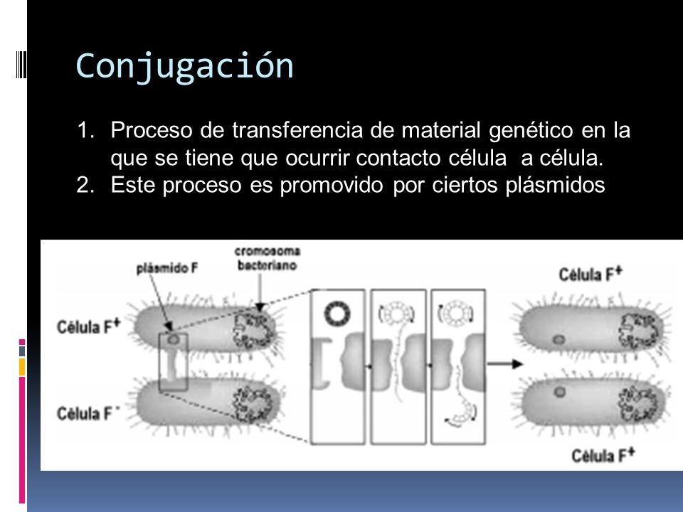 Conjugación Proceso de transferencia de material genético en la que se tiene que ocurrir contacto célula a célula.