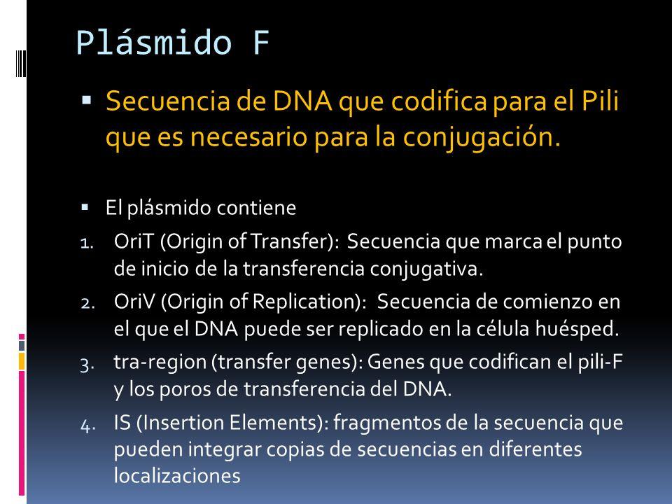 Plásmido F Secuencia de DNA que codifica para el Pili que es necesario para la conjugación. El plásmido contiene.