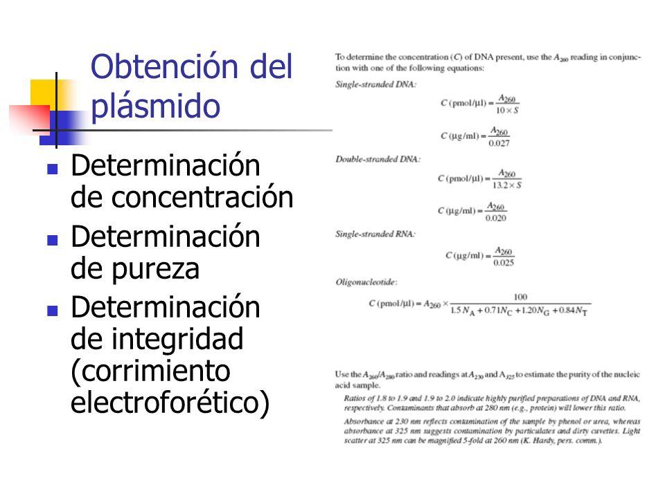 Obtención del plásmido