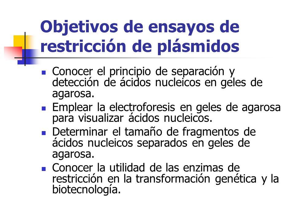 Objetivos de ensayos de restricción de plásmidos