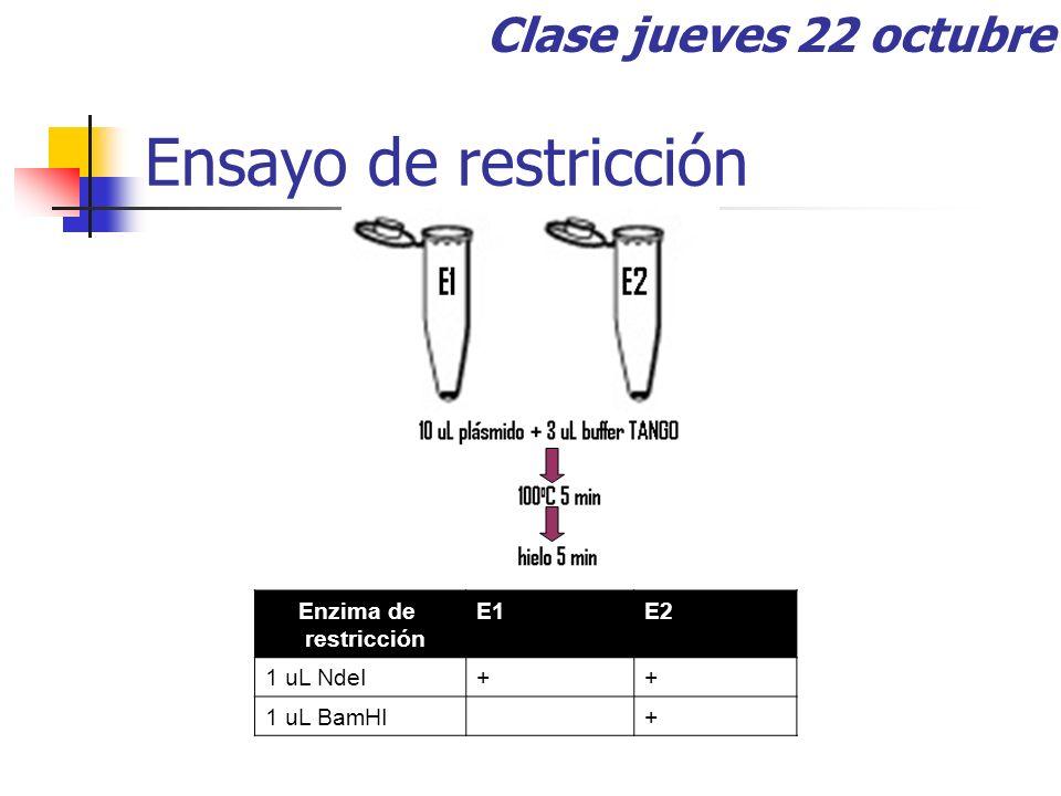 Ensayo de restricción Clase jueves 22 octubre Enzima de restricción E1