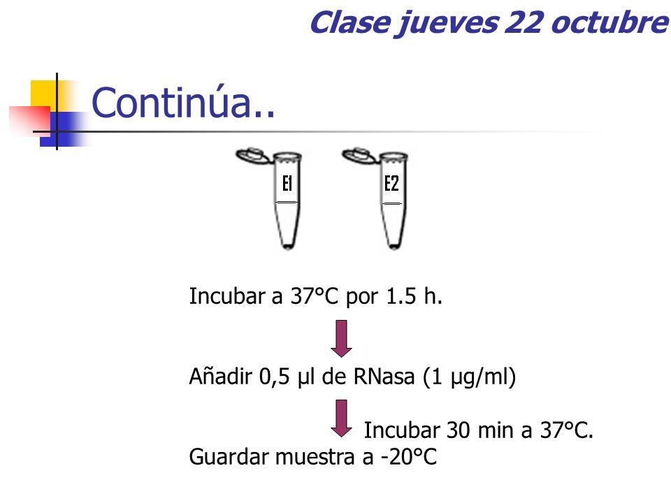Continúa.. Clase jueves 22 octubre Incubar a 37°C por 1.5 h.