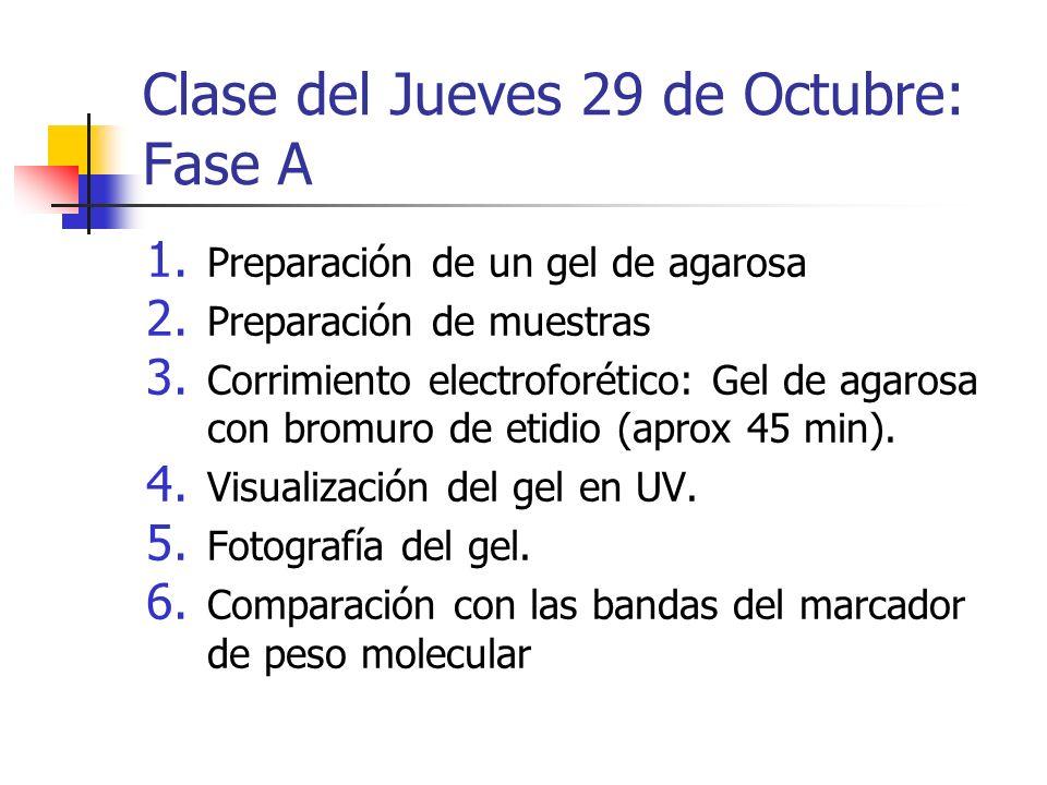 Clase del Jueves 29 de Octubre: Fase A