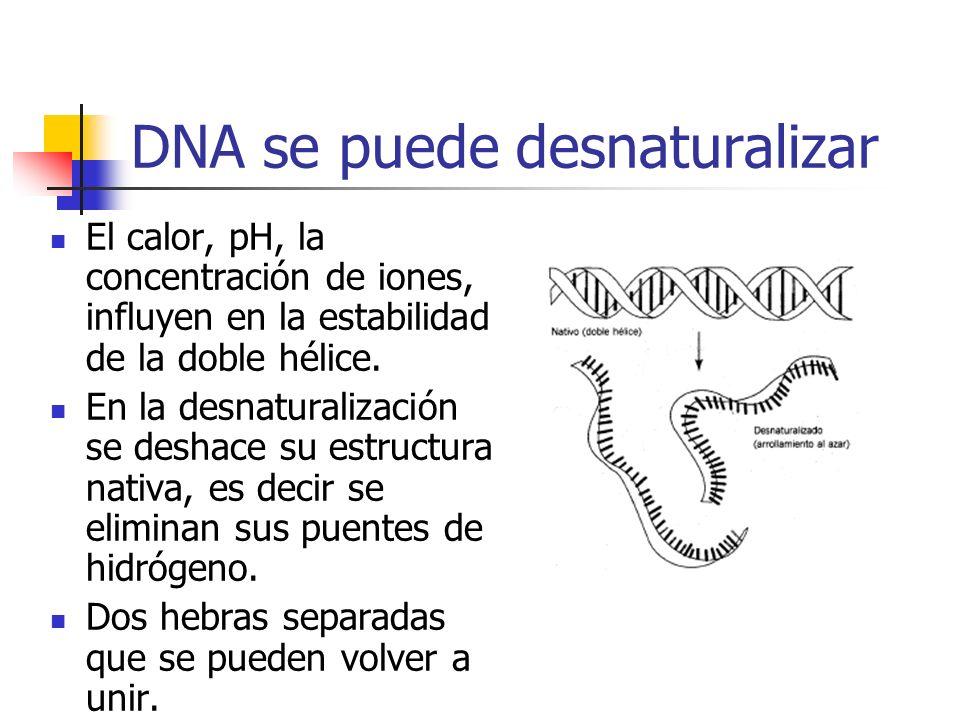 DNA se puede desnaturalizar
