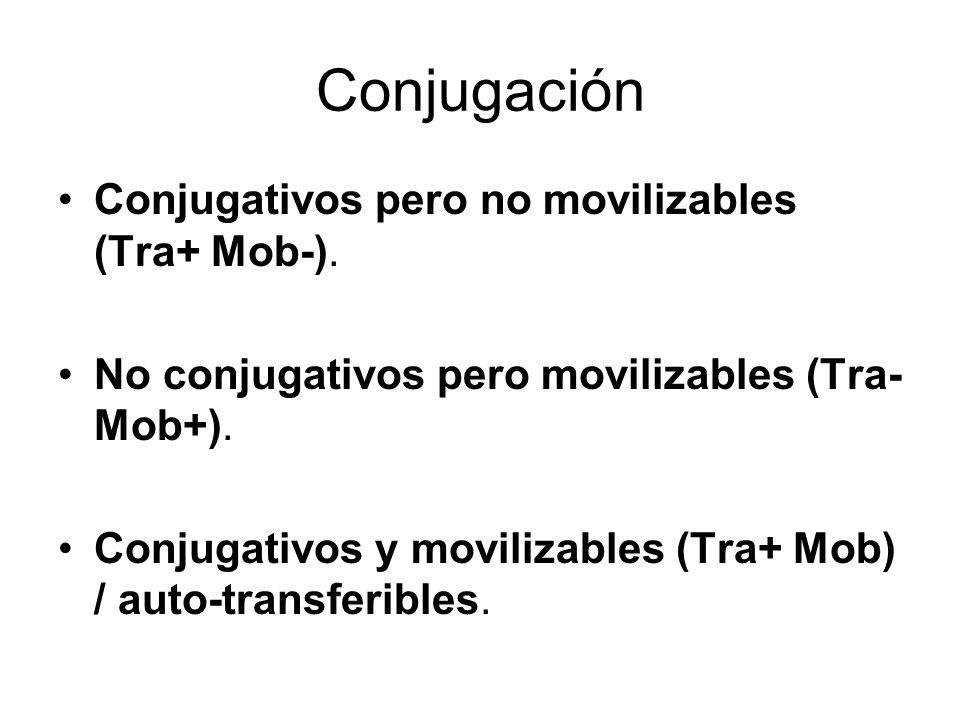 Conjugación Conjugativos pero no movilizables (Tra+ Mob-).