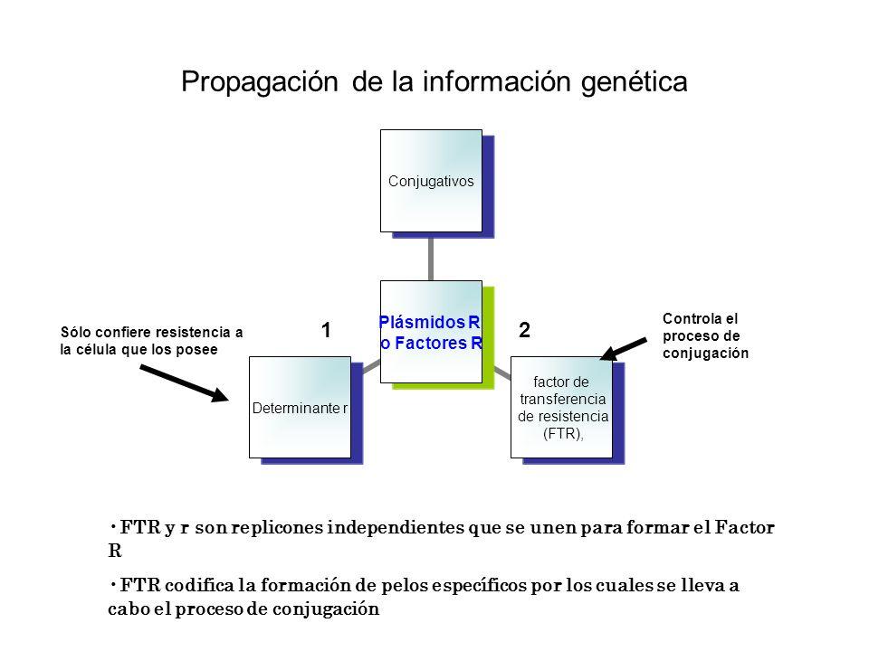 Propagación de la información genética