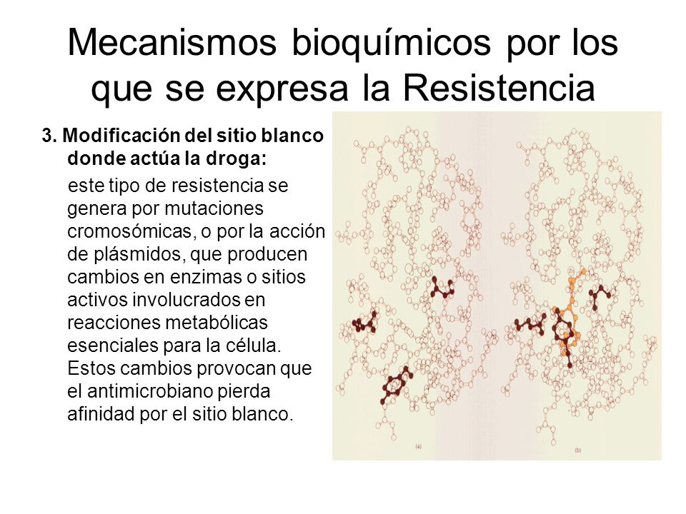 Mecanismos bioquímicos por los que se expresa la Resistencia