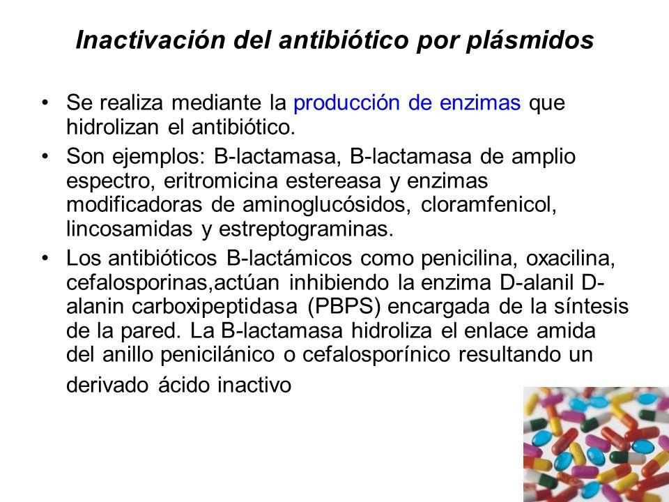 Inactivación del antibiótico por plásmidos