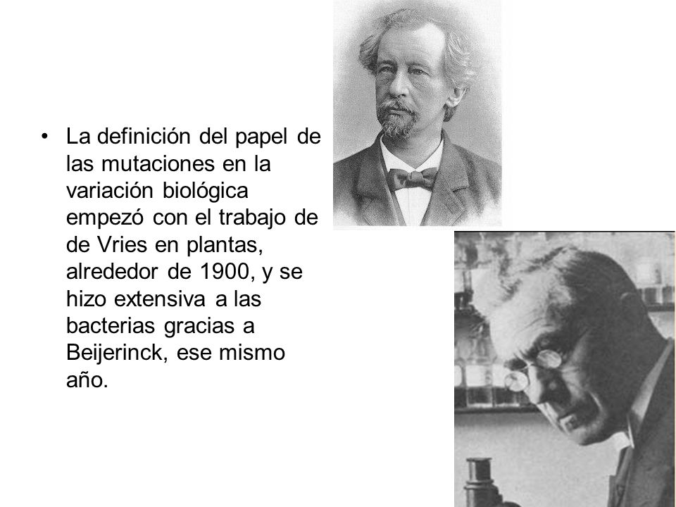 La definición del papel de las mutaciones en la variación biológica empezó con el trabajo de de Vries en plantas, alrededor de 1900, y se hizo extensiva a las bacterias gracias a Beijerinck, ese mismo año.
