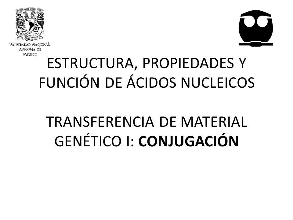 ESTRUCTURA, PROPIEDADES Y FUNCIÓN DE ÁCIDOS NUCLEICOS TRANSFERENCIA DE MATERIAL GENÉTICO I: CONJUGACIÓN
