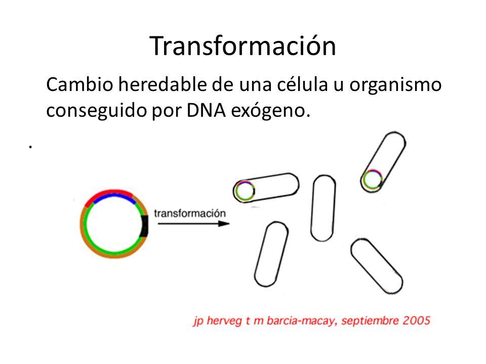 Transformación Cambio heredable de una célula u organismo conseguido por DNA exógeno. .