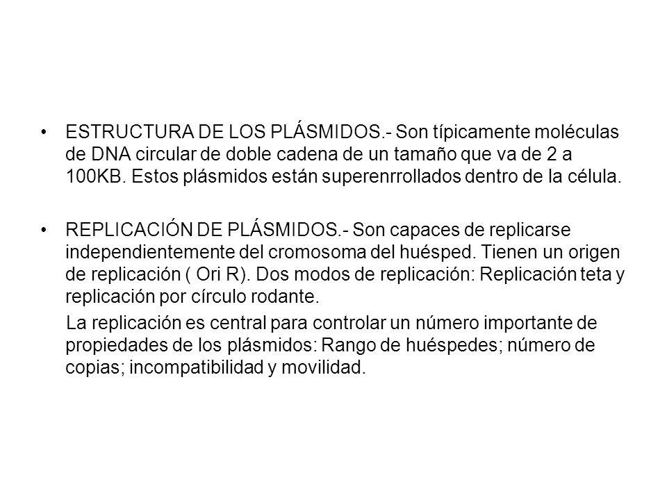 ESTRUCTURA DE LOS PLÁSMIDOS