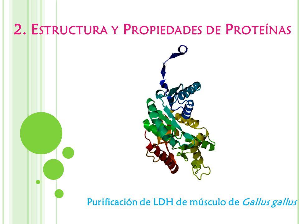 2. Estructura y Propiedades de Proteínas