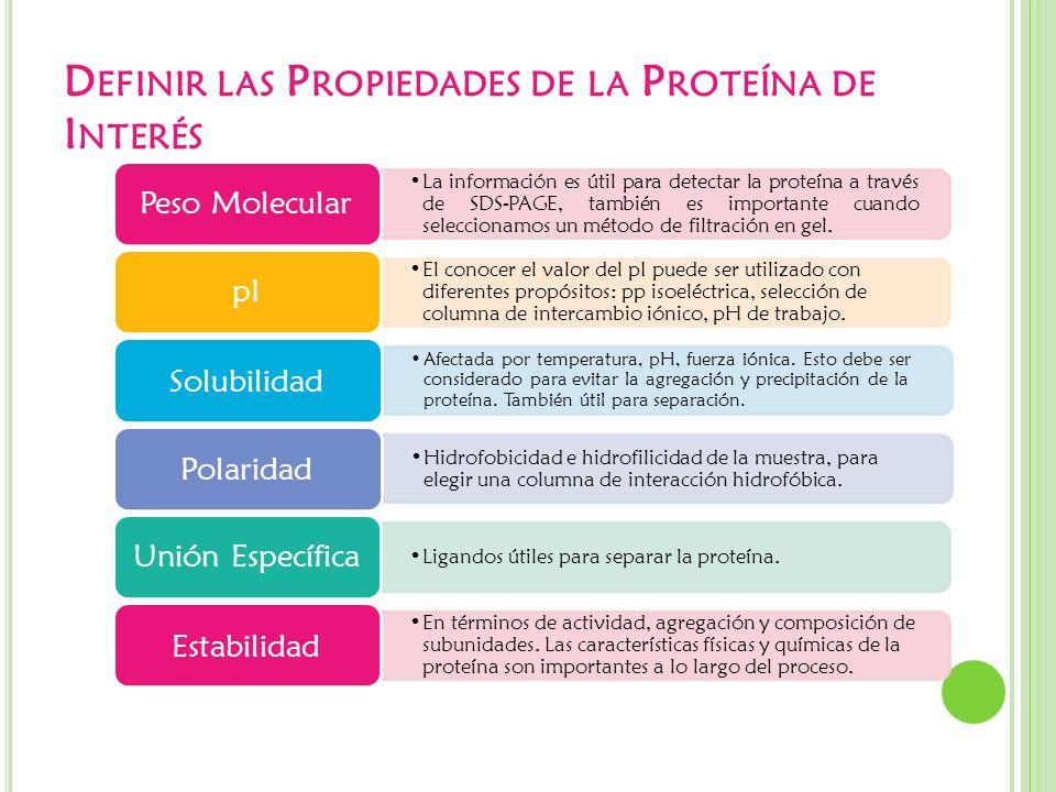 Definir las Propiedades de la Proteína de Interés