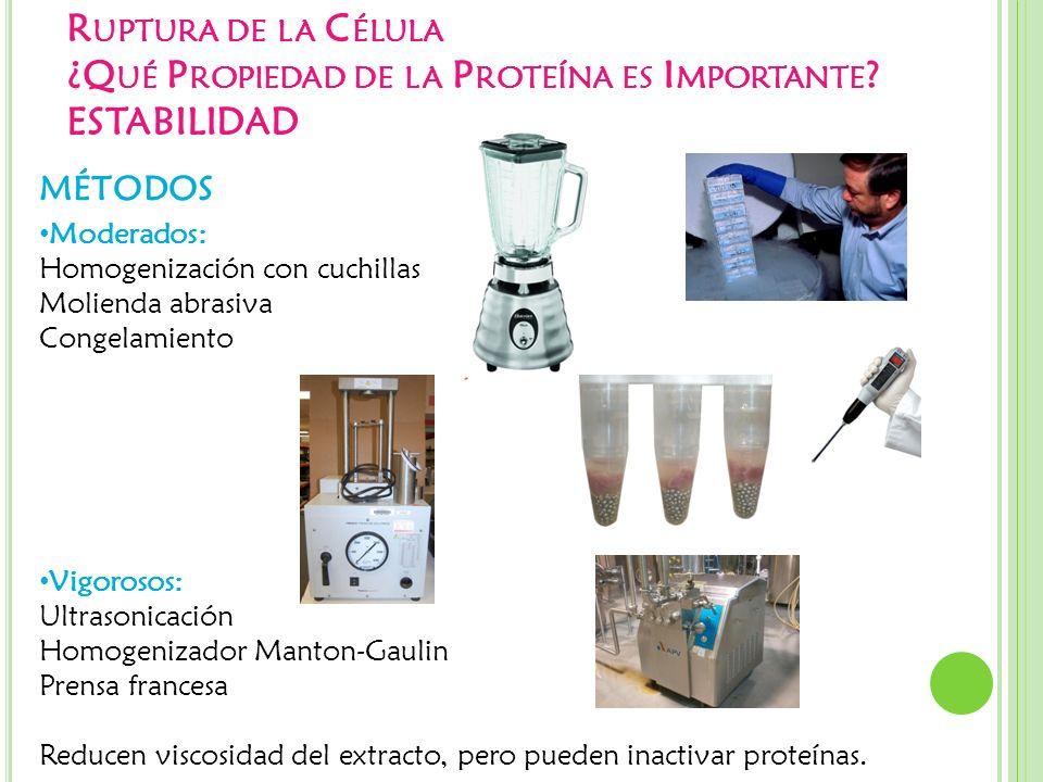 Ruptura de la Célula ¿Qué Propiedad de la Proteína es Importante