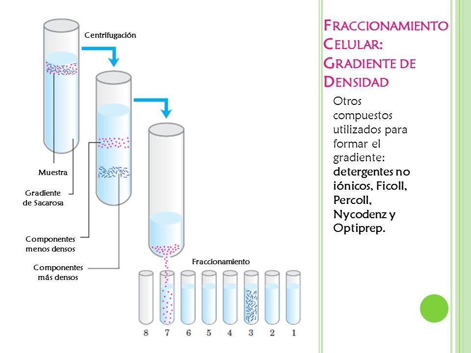 Fraccionamiento Celular: Gradiente de Densidad