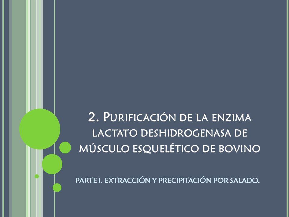 2. Purificación de la enzima lactato deshidrogenasa de músculo esquelético de bovino