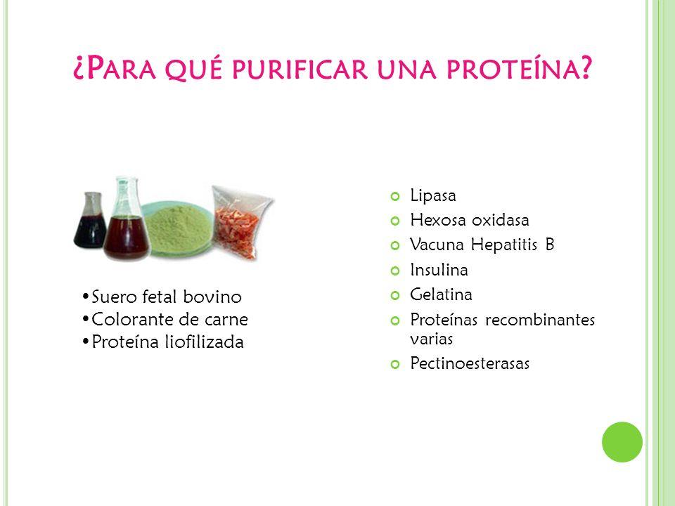 ¿Para qué purificar una proteína