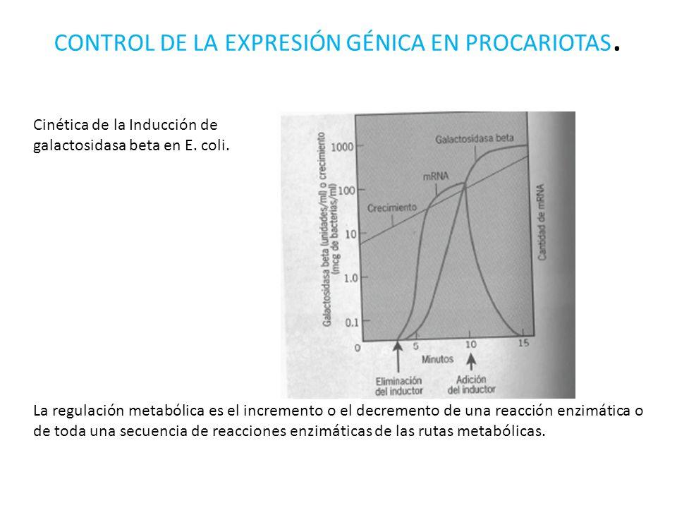 CONTROL DE LA EXPRESIÓN GÉNICA EN PROCARIOTAS.