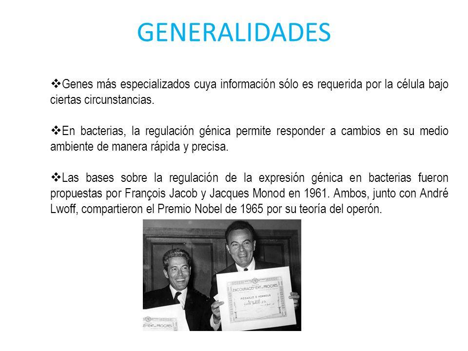 GENERALIDADES Genes más especializados cuya información sólo es requerida por la célula bajo ciertas circunstancias.