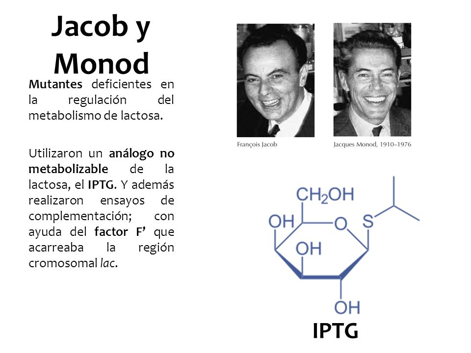 Jacob y MonodMutantes deficientes en la regulación del metabolismo de lactosa.