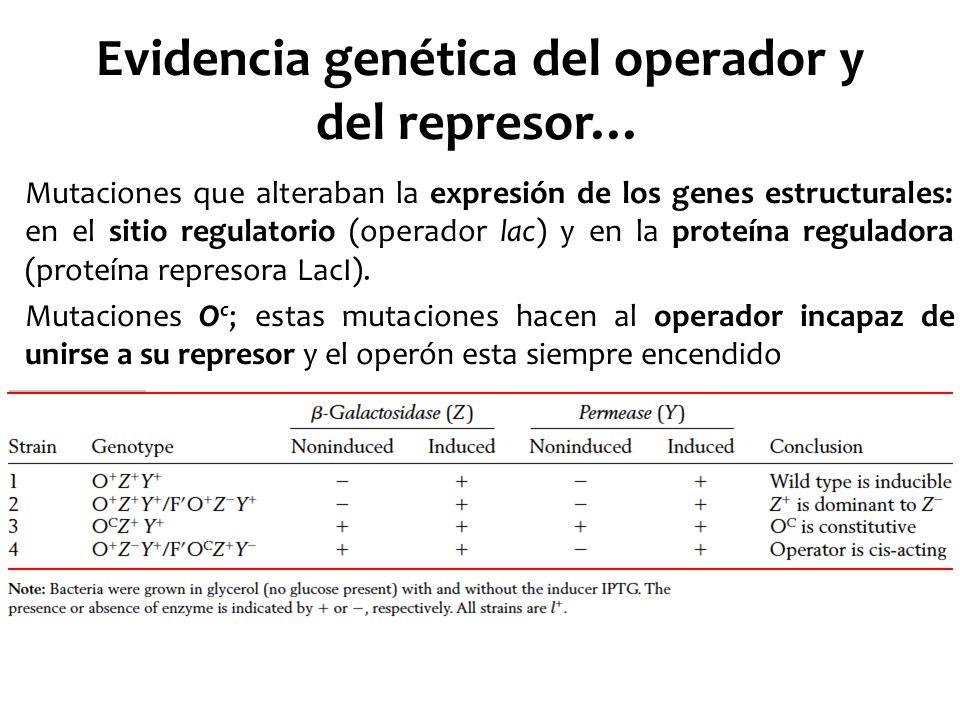 Evidencia genética del operador y del represor…