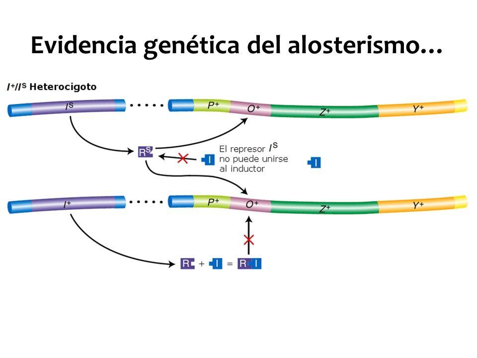 Evidencia genética del alosterismo…
