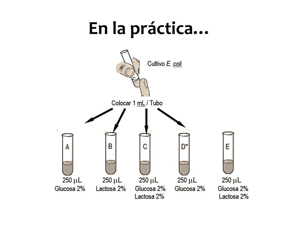 En la práctica…