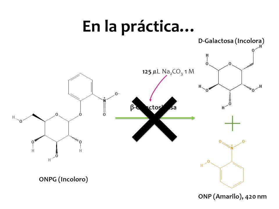 En la práctica… D-Galactosa (Incolora) 125 L Na2CO3 1 M