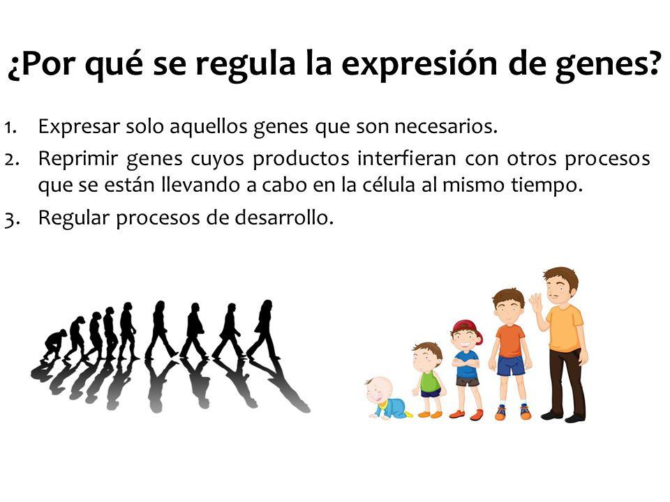 ¿Por qué se regula la expresión de genes