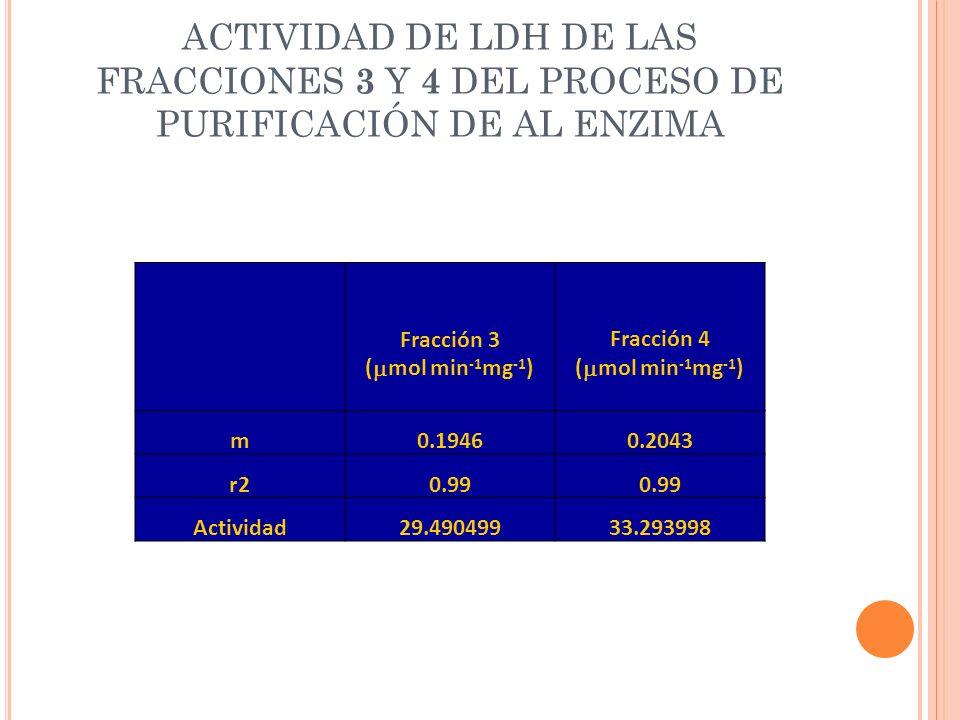 ACTIVIDAD DE LDH DE LAS FRACCIONES 3 Y 4 DEL PROCESO DE PURIFICACIÓN DE AL ENZIMA
